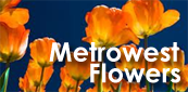 Metrowest Flowers The Wholesale Flower Market for Greater Boston